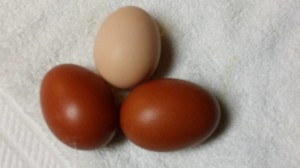 august eggs