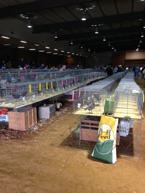 Supporting poultry shows